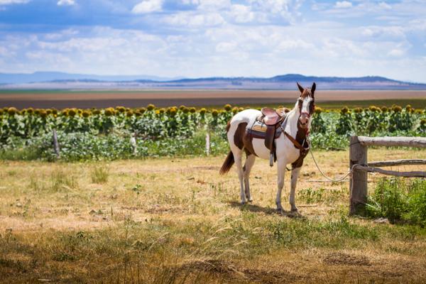 outback-australia-3