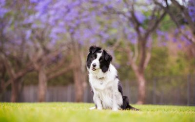 Kadie – Sutherland Shire Pet Photography