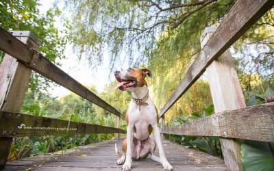 Mini Session – Pet Photographer Sydney