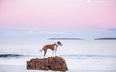 Hero Shot Session – Sydney Pet Photographer