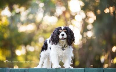 Fonzi – Sutherland Shire Dog Photographer