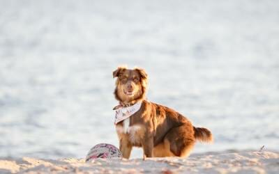 Sunny – Beach Dog Photography