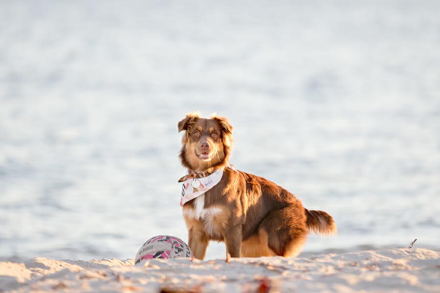 Sunny – Beach Dog Photography