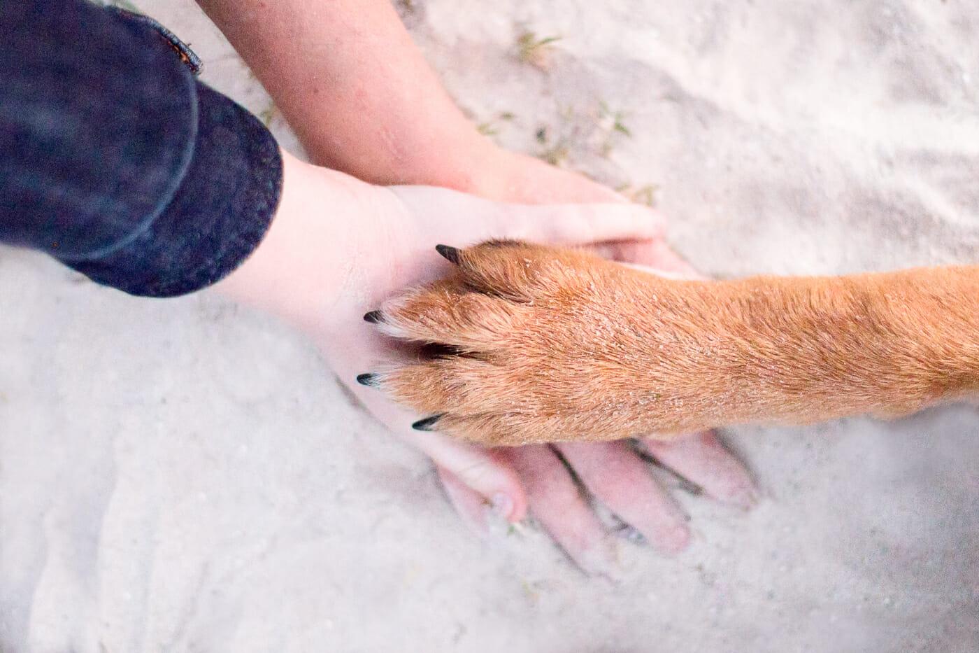 Dog-Team