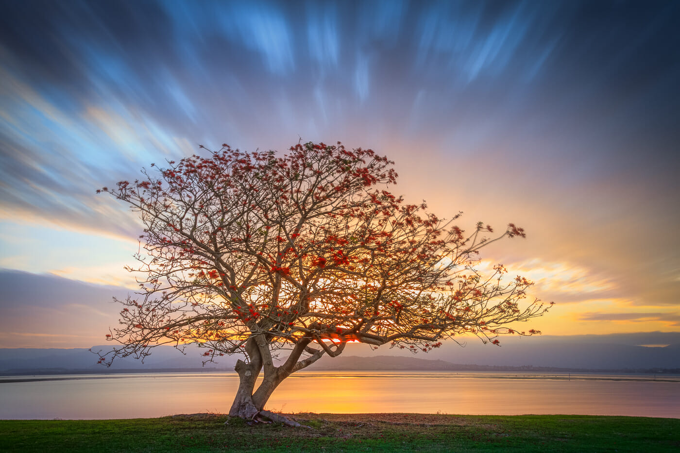 lake illawarra tree