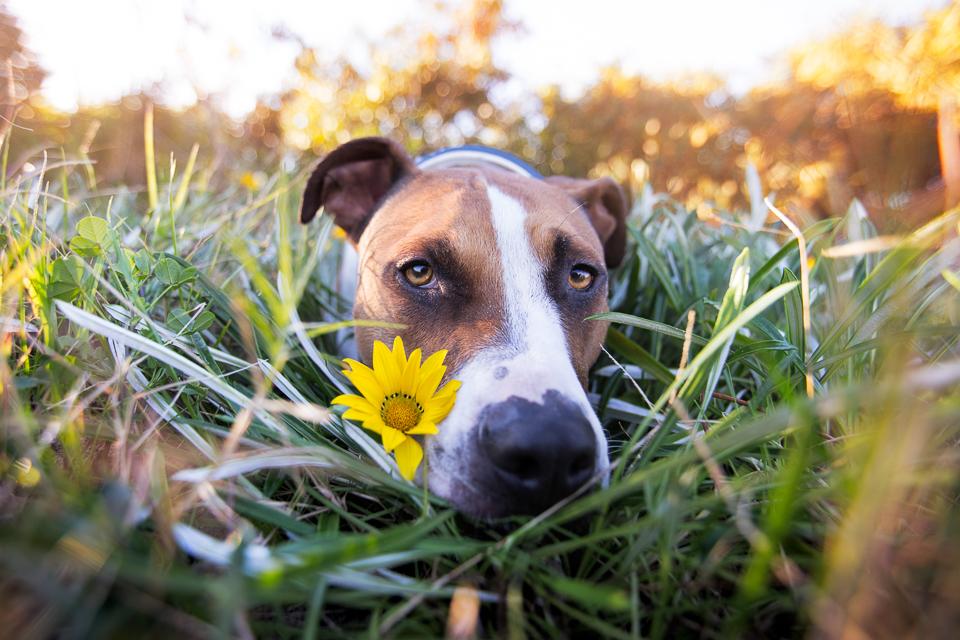 commercial-pet-photographer-10