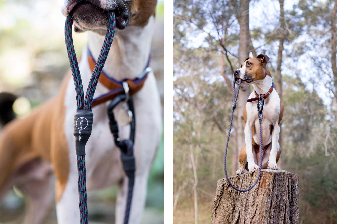 commercial-pet-photographer-11