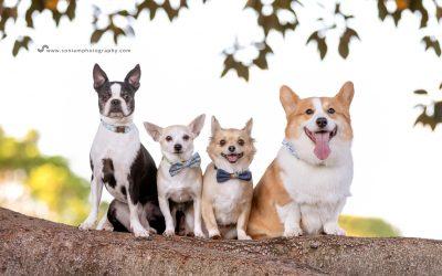 Alfie, Bruno, Macey & Peanut