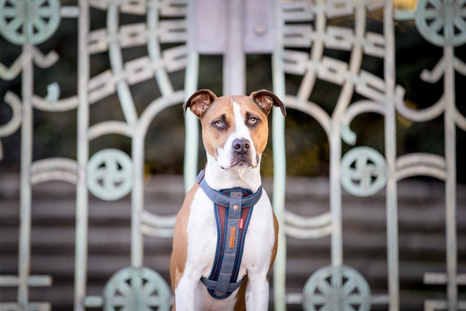 Commercial-dog-photo-ezydog1