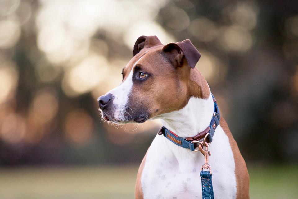 Commercial-dog-photo-ezydog2