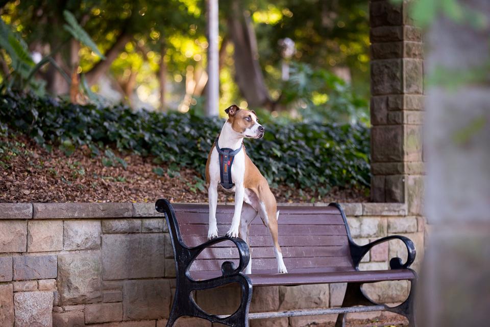 Commercial-dog-photo-ezydog3