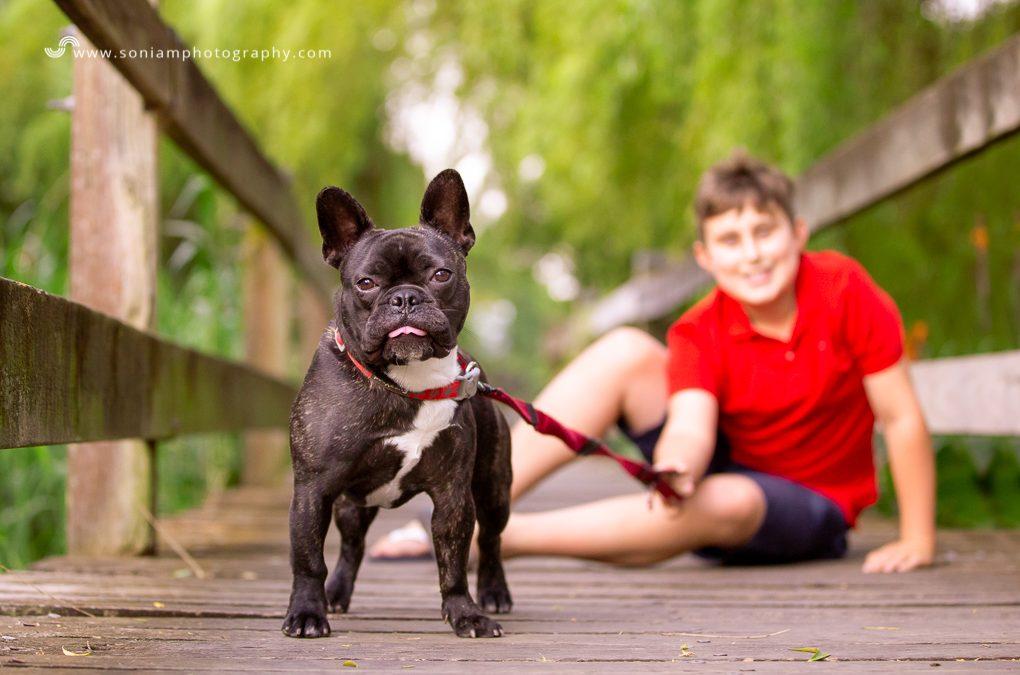 Bolt The French Bulldog