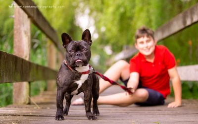 Bolt The French Bulldog