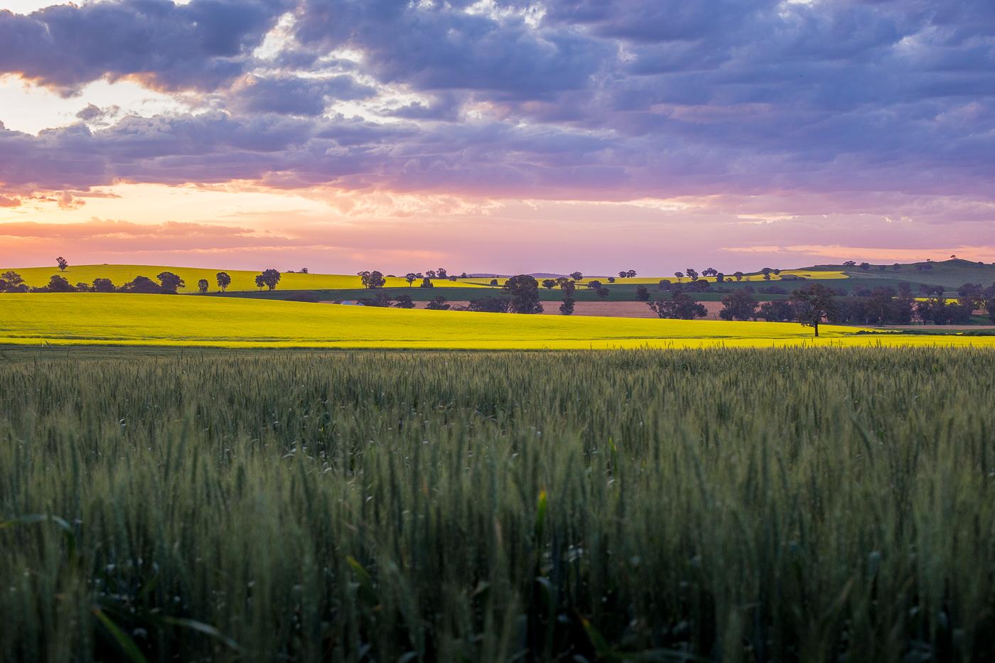 Canowindra Fields